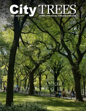 City Trees Cover Image